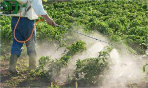 شركة رش مبيدات ومكافحة حشرات