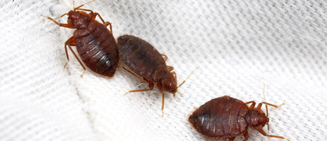 مكافحة حشرات بالخبر للقضاء على البق